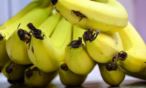 Мир может остаться без бананов